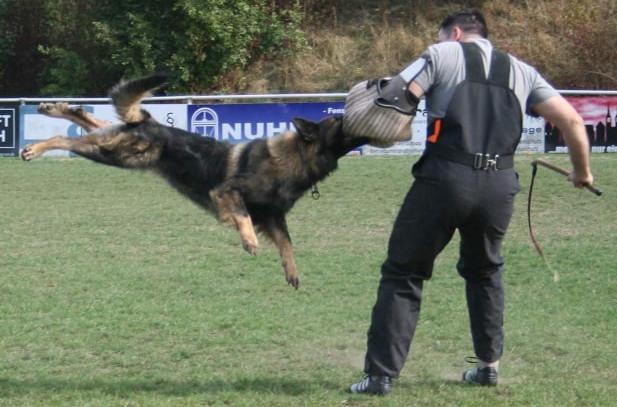 Schutzhundausbildung